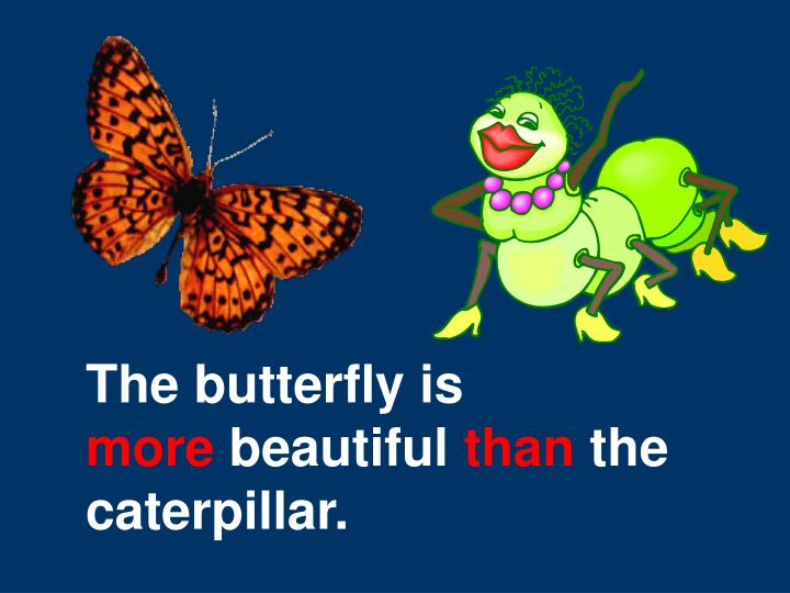 The butterfly is