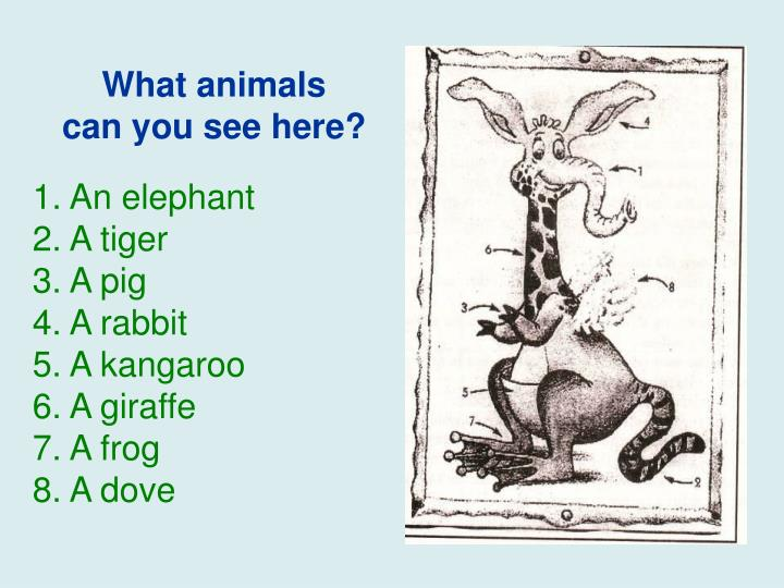 What animals