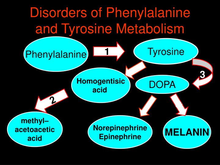 Disorders of Phenylalanine  and Tyrosine Metabolism