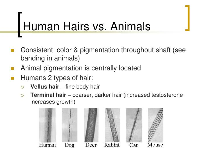 Human Hairs vs. Animals