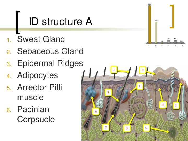 ID structure A