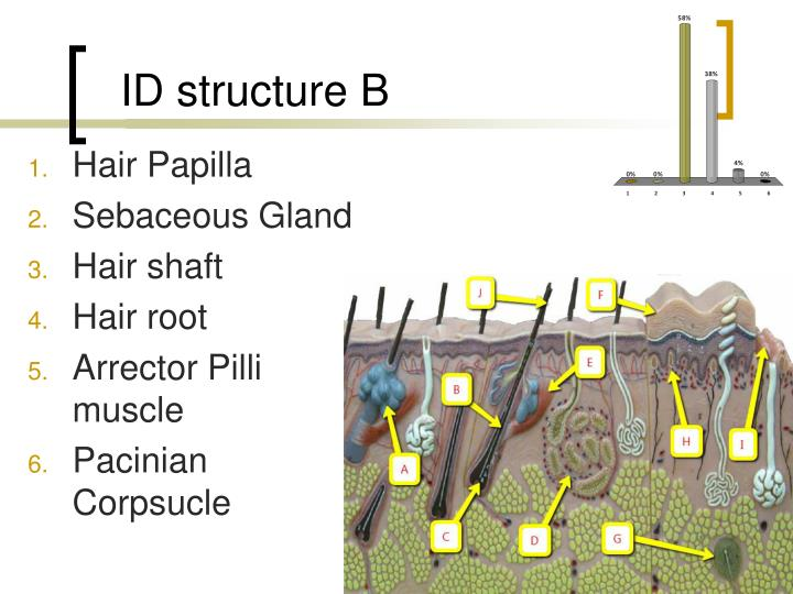 ID structure B