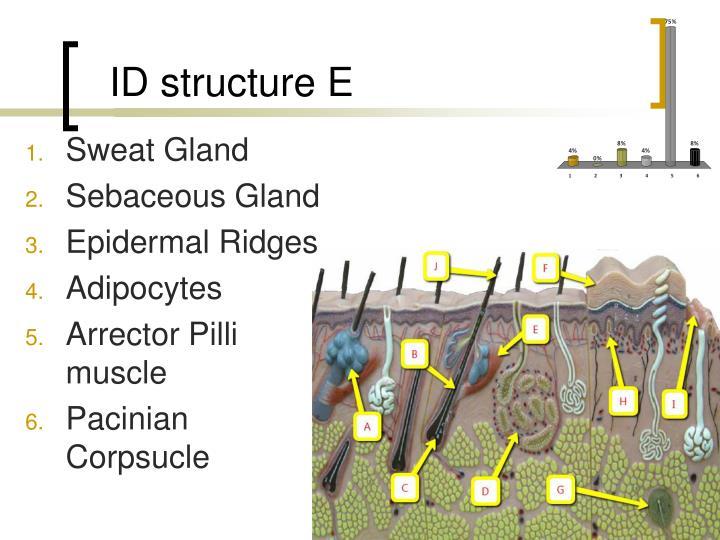 ID structure E