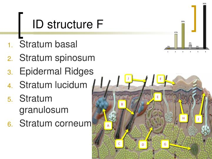 ID structure F