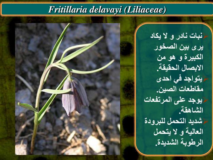 Fritillaria delavayi (Liliaceae)