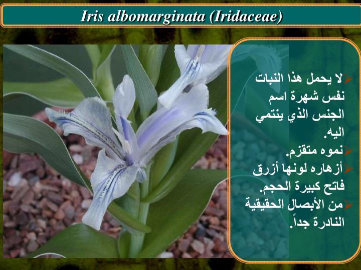 Iris albomarginata (Iridaceae)