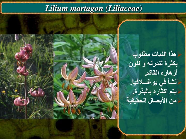 Lilium martagon (Liliaceae)