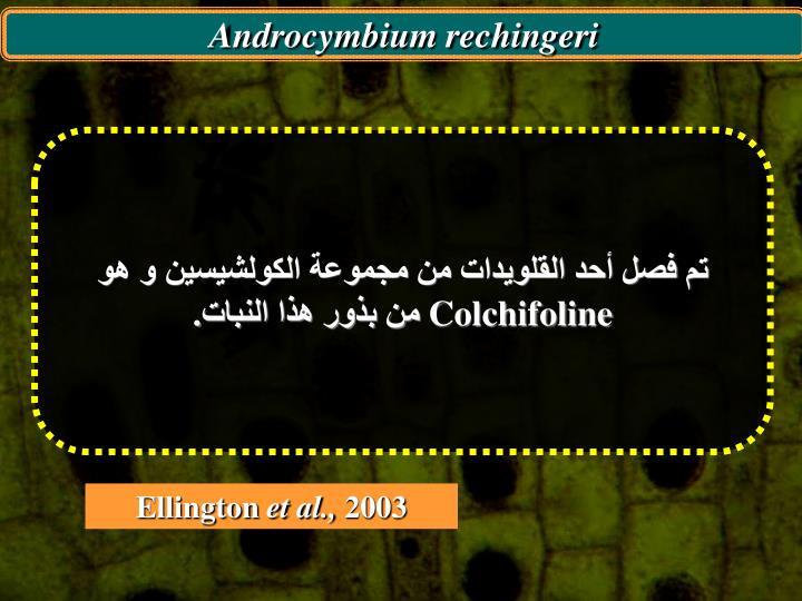 Androcymbium rechingeri