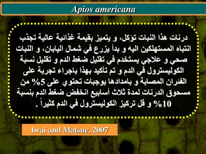 Apios americana