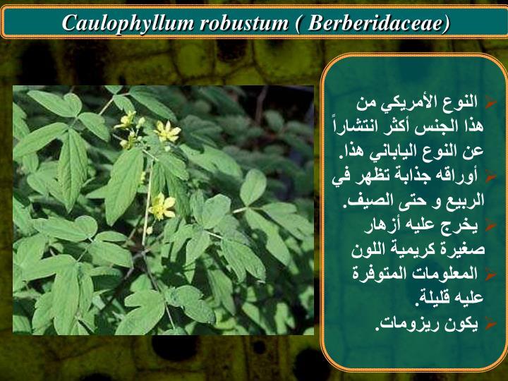 Caulophyllum robustum ( Berberidaceae)
