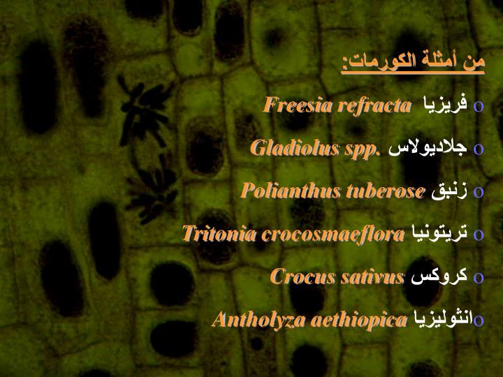 من أمثلة الكورمات:
