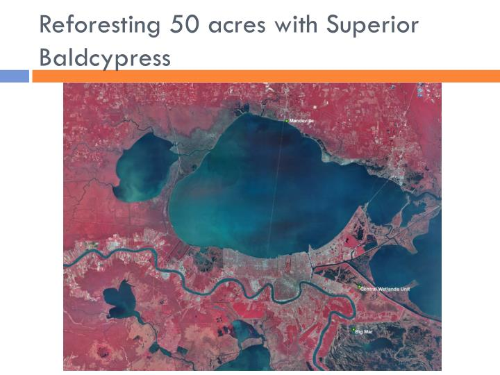 Reforesting 50 acres with Superior
