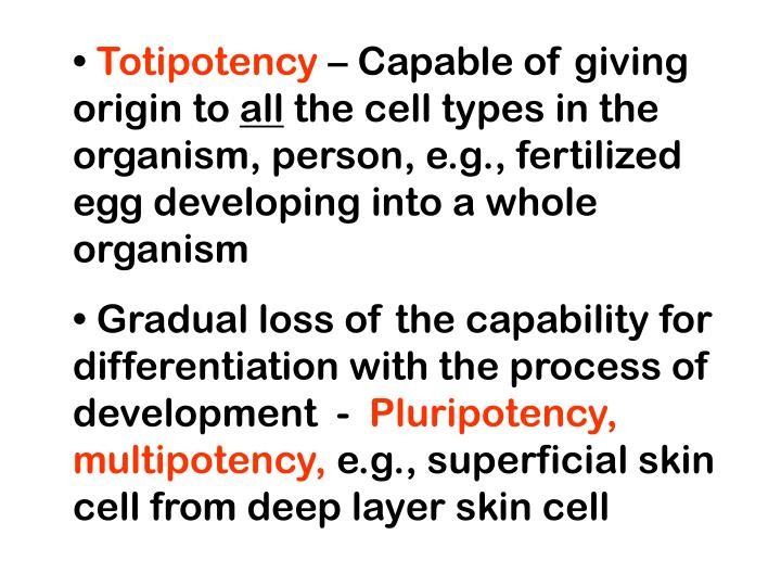 Totipotency