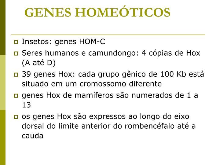 GENES HOMEÓTICOS