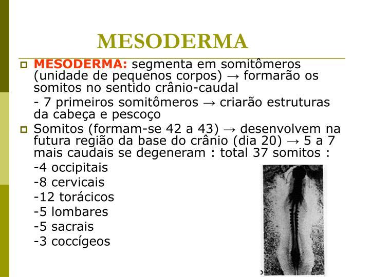 MESODERMA