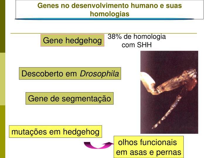 Genes no desenvolvimento humano e suas homologias