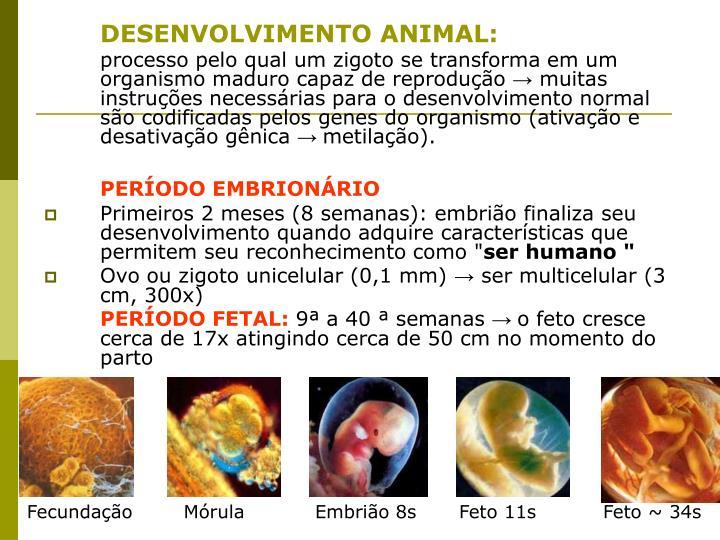 DESENVOLVIMENTO ANIMAL: