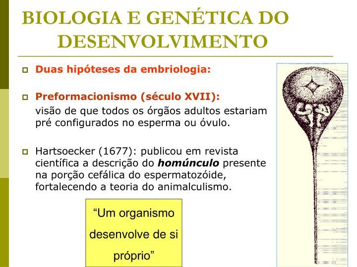 BIOLOGIA E GENÉTICA DO DESENVOLVIMENTO