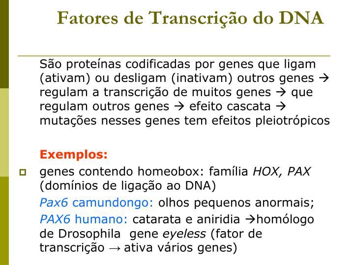 Fatores de Transcrição do DNA