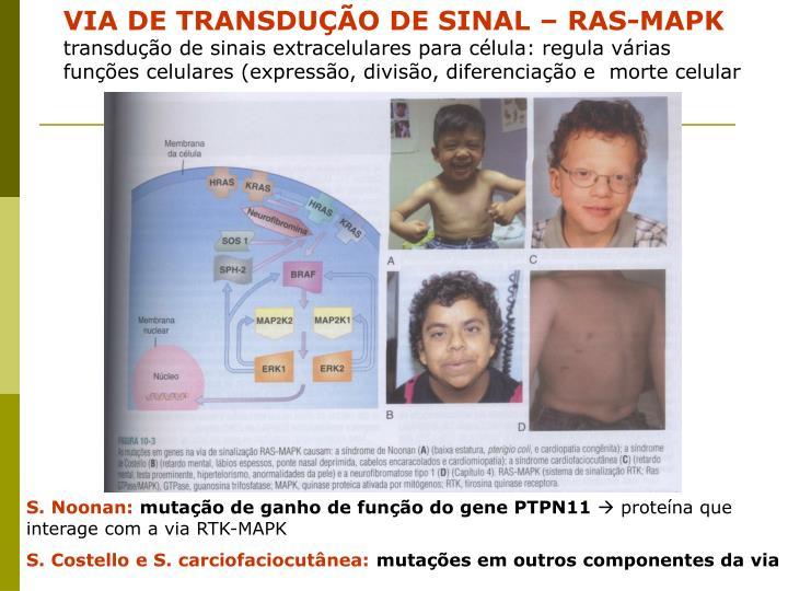 VIA DE TRANSDUÇÃO DE SINAL – RAS-MAPK