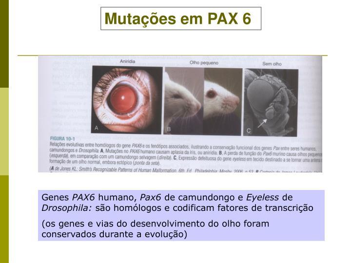 Mutações em PAX 6