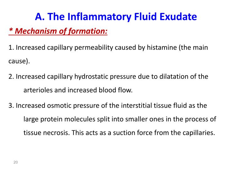A. The Inflammatory Fluid Exudate