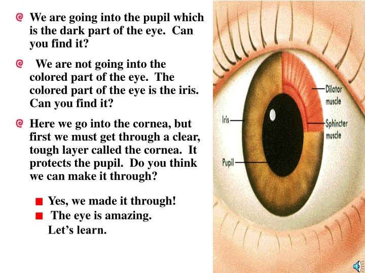 We are going into the pupil which is the dark part of the eye.  Can you find it?