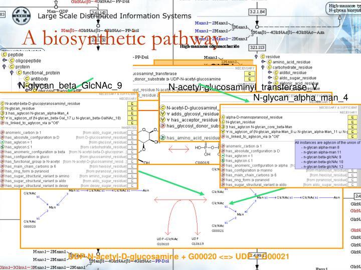 N-glycan_beta_GlcNAc_9