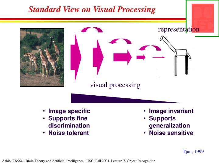 Standard View on Visual Processing
