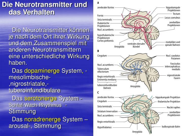 Die Neurotransmitter und das Verhalten