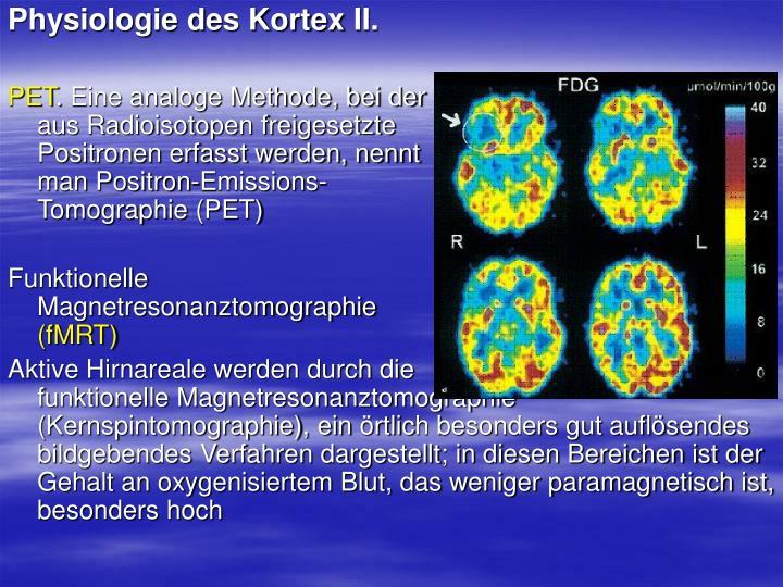 Physiologie des Kortex