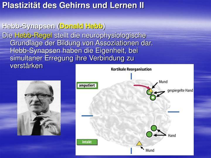 Plastizität des Gehirns und Lernen