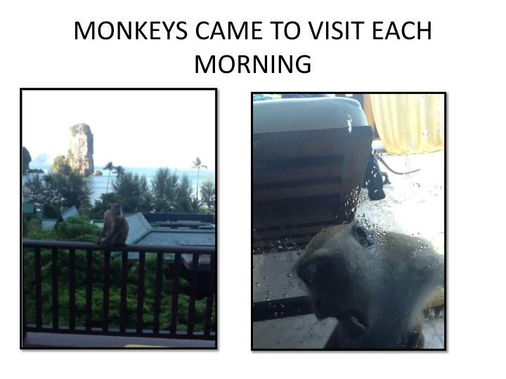 MONKEYS CAME TO