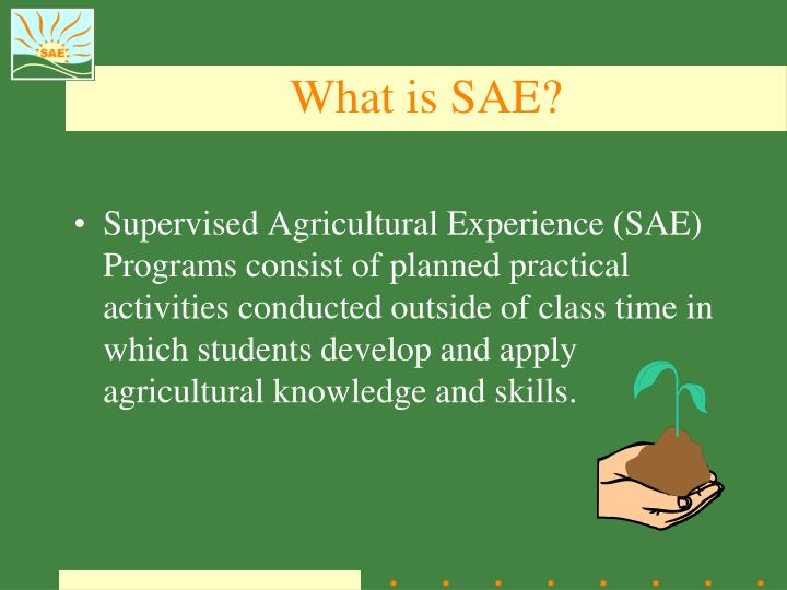 What is SAE?