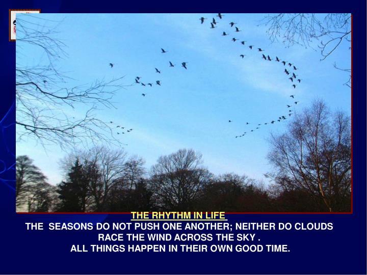 THE RHYTHM IN LIFE