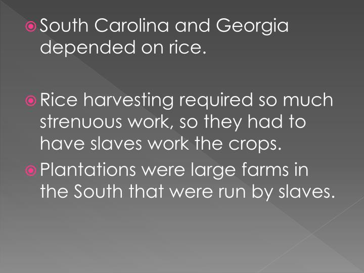 South Carolina and Georgia depended on rice.