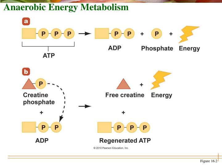 Anaerobic Energy Metabolism