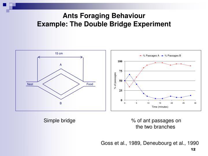 Ants Foraging Behaviour