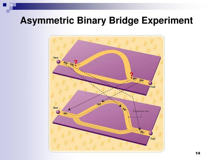 Asymmetric Binary Bridge Experiment