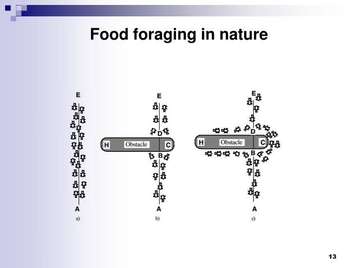 Food foraging in nature