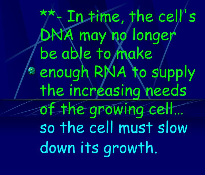 **- In time, the cell's DNA may no longer be able to make enough RNA to supply the increasing needs of the growing cell…