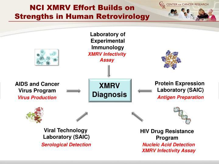 XMRV Infectivity
