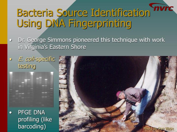 Bacteria Source Identification Using DNA Fingerprinting