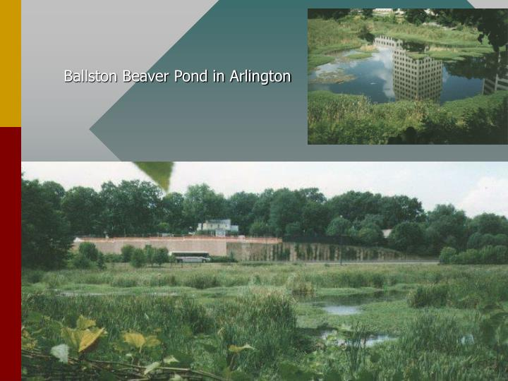 Ballston Beaver Pond in Arlington