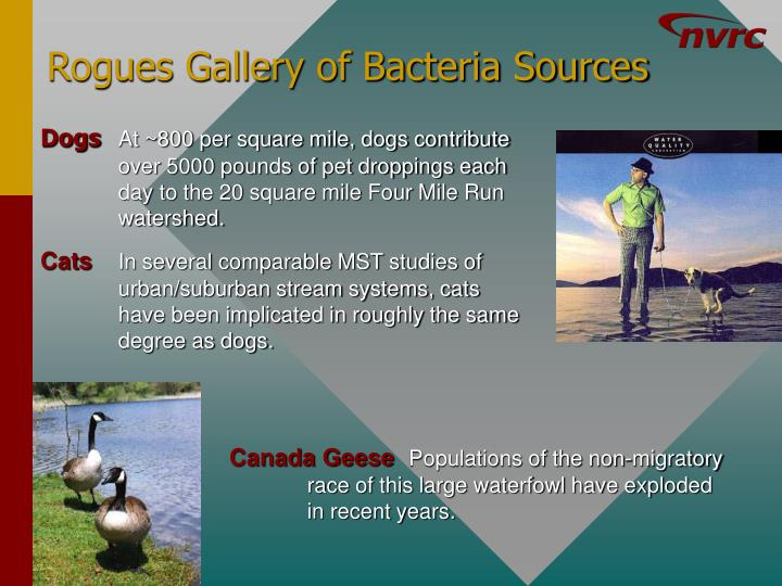 Rogues Gallery of Bacteria Sources