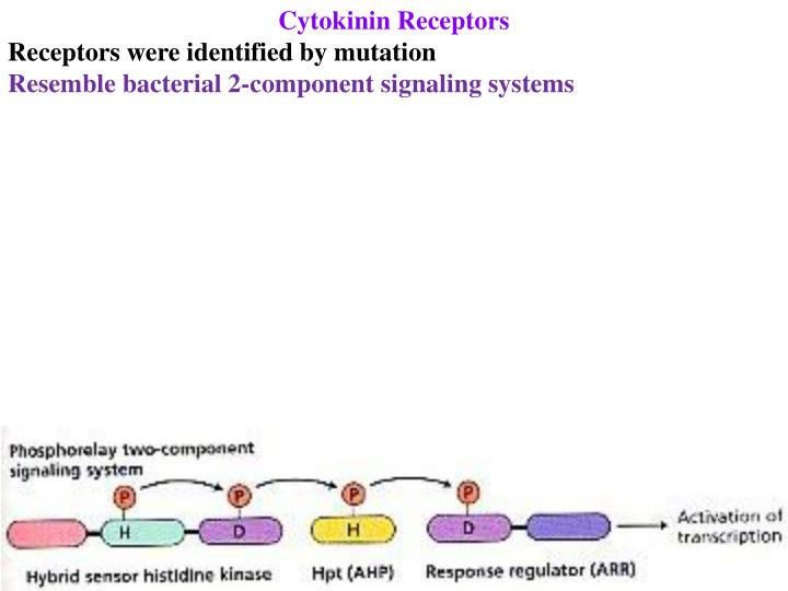 Cytokinin Receptors