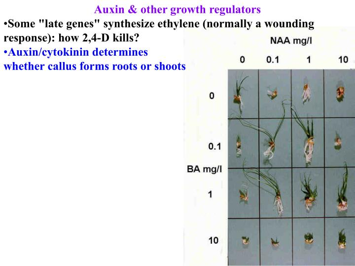 Auxin & other growth regulators