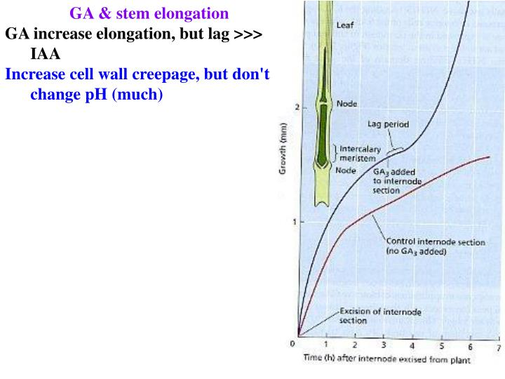 GA & stem elongation