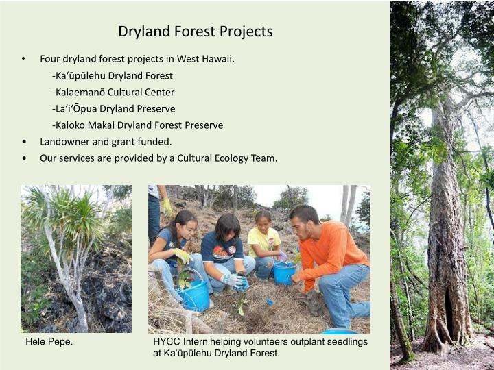 Dryland Forest Projects