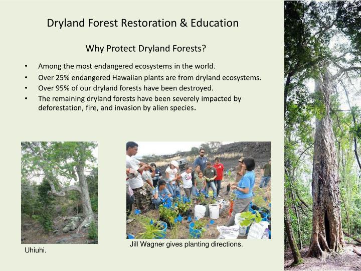 Dryland Forest Restoration & Education